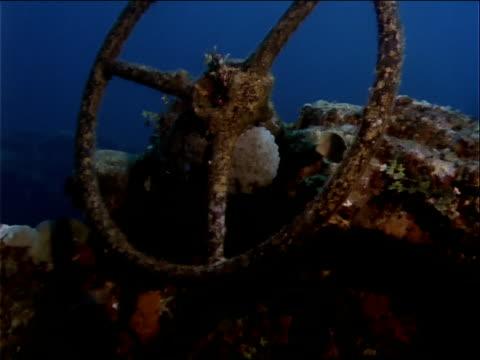 stockvideo's en b-roll-footage met fish swim around an egg cluster embedded in a sunken shipwreck. - scheepswrak