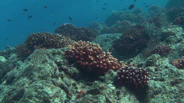 fish swim around corals. - futter suchen stock-videos und b-roll-filmmaterial