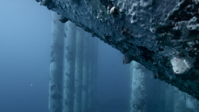 fish swim around legs of oil platform, qatar - deep stock videos & royalty-free footage