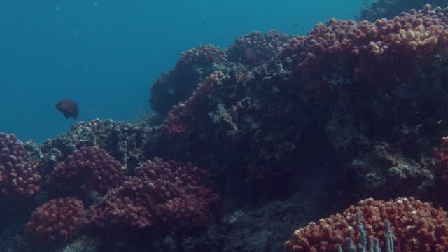 fish swim around red corals. - futter suchen stock-videos und b-roll-filmmaterial