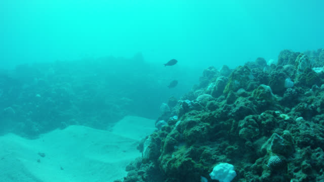 fish swim around reef, scuba divers approach shark net - seabed stock videos & royalty-free footage