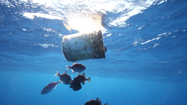Fish swim at surface near bucket, POV