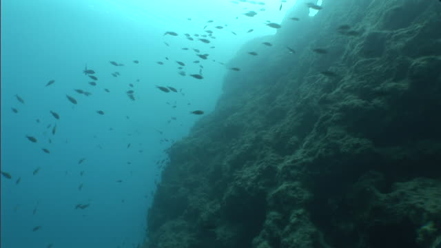 fish swim near a sunken city in turkey. - old ruin stock videos & royalty-free footage