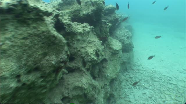 fish swim near the ancient ruins of a sunken city in turkey. - gammal ruin bildbanksvideor och videomaterial från bakom kulisserna