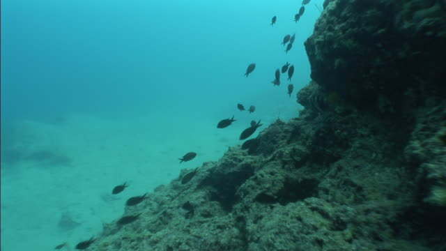 fish swim near the underwater ruins of an ancient city in turkey. - old ruin stock videos & royalty-free footage