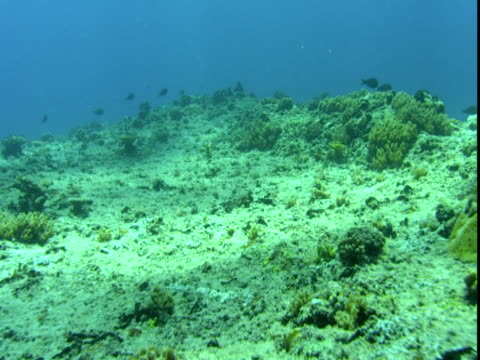 fish swim over a coral reef on the seabed near palau. - palau stock videos & royalty-free footage