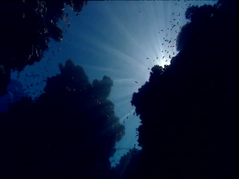 Fish swim over coral silhouetted by sunburst, Red Sea