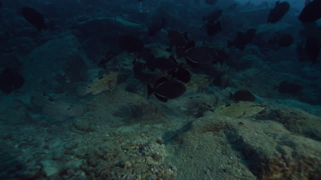 fish swim over seabed, ascension island. - squirrelfish stock videos & royalty-free footage