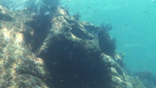fish swim over sun-dappled rocks. - dappled light stock videos and b-roll footage