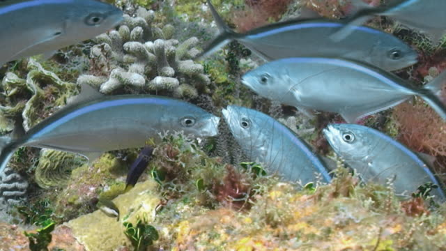 """stockvideo's en b-roll-footage met """"fish swim through colourful coral, gulf of mexico"""" - golf van mexico"""