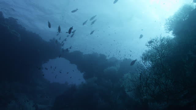 stockvideo's en b-roll-footage met fish swim through coral arch in blue ocean, fiji - onder