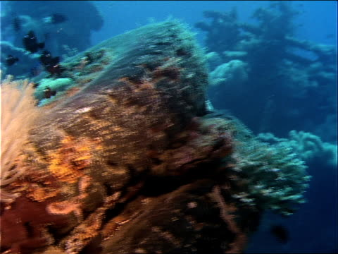 stockvideo's en b-roll-footage met fish swim through coral growing on a tire at the site of a world war ii shipwreck. - scheepswrak