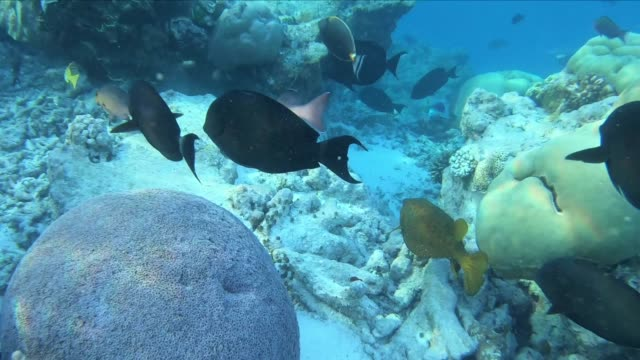 fish swimming about coral