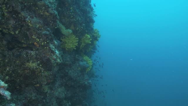 stockvideo's en b-roll-footage met ds fish swimming around underwater reef / pag, island of pag, croatia - breedbeeldformaat