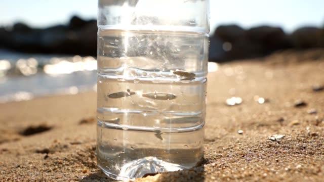 fische, die in einer flasche am strand schwimmen - flasche stock-videos und b-roll-filmmaterial