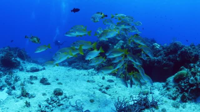 vídeos y material grabado en eventos de stock de fish swimming in ocean near reef / cozumel, quintana roo, mexico - quintana roo