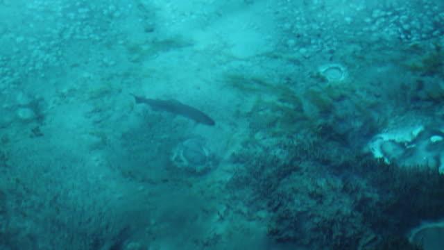 stockvideo's en b-roll-footage met vissen zwemmen in turquoise meer - vissen buitensport