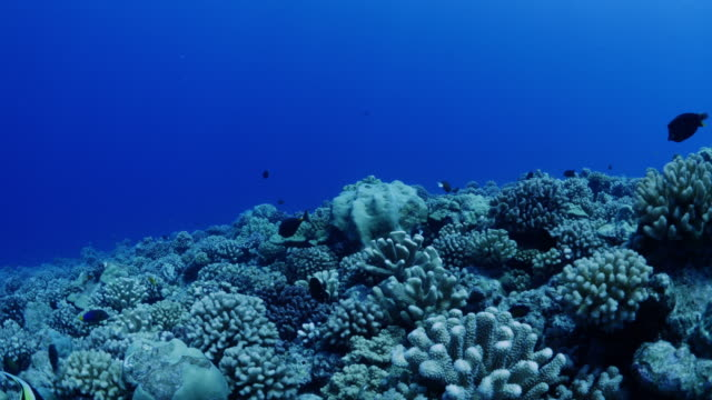 fish swimming over reef in tahiti / moorea, french polynesia - moorea stock videos & royalty-free footage