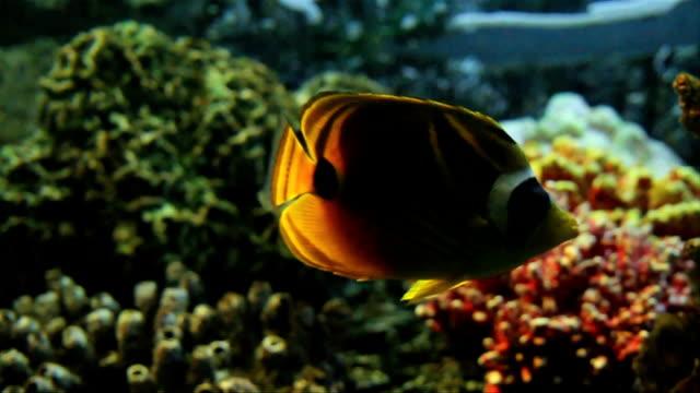 vídeos y material grabado en eventos de stock de ws fish swimming / pretoria/ south africa - cnidario