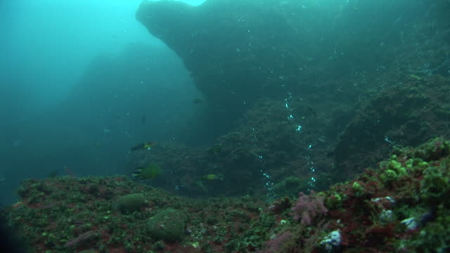 fish swimming through bubbles coming from hydrothermal vent, azores, atlantic ocean - seabed stock videos & royalty-free footage