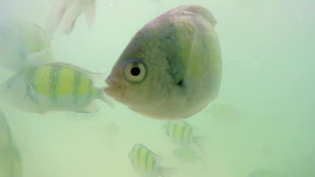 vídeos de stock e filmes b-roll de peixes a nadar - organismo aquático