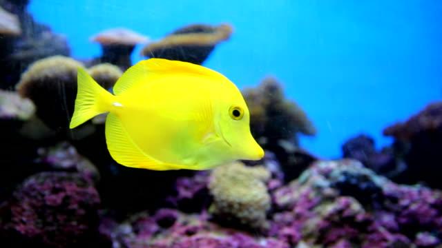 stockvideo's en b-roll-footage met fish swimming - scubaduiken