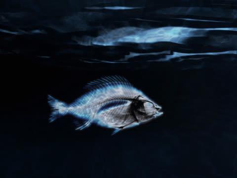 fish swimming - tierisches skelett stock-videos und b-roll-filmmaterial