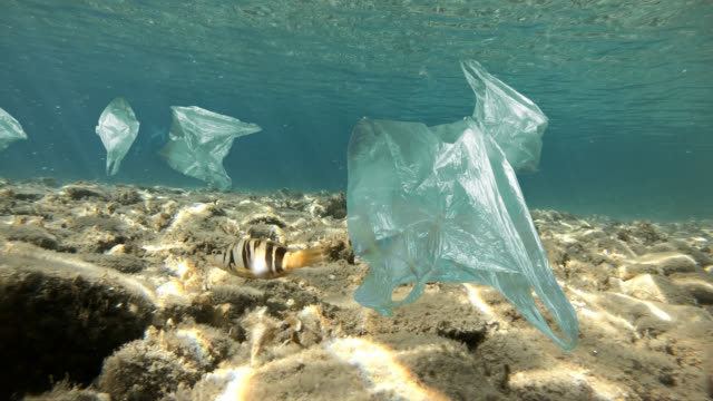 fish swims in sea polluted by plastic bags - seabed stock videos & royalty-free footage