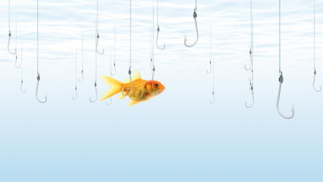 fish swims near fishing hooks - hook stock videos & royalty-free footage