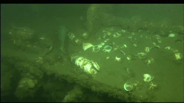 a fish swims near the sunken wreckage of the steamer portland. - nordatlantik stock-videos und b-roll-filmmaterial