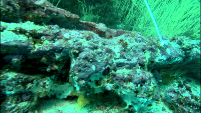 a fish swims over a rocky embankment covered with coral and sea grass. - pazifik stock-videos und b-roll-filmmaterial