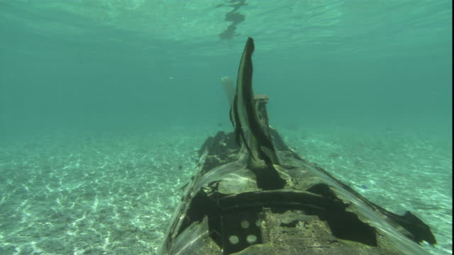 a fish swims over a sunken fighter jet on the ocean floor. - 航空事故点の映像素材/bロール
