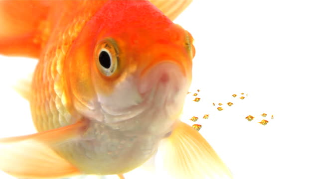 fish talking - copy space stock videos & royalty-free footage
