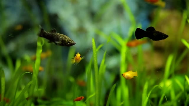 fish tank, relaxing concept - petshop stock videos and b-roll footage