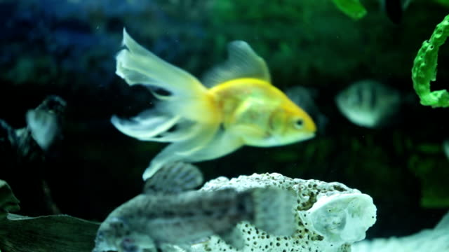 fish tank - petshop stock videos and b-roll footage