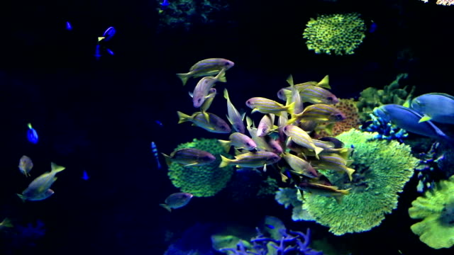 fish tank - reef stock videos and b-roll footage