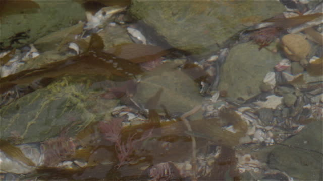 fish through water - tidal pool stock videos and b-roll footage
