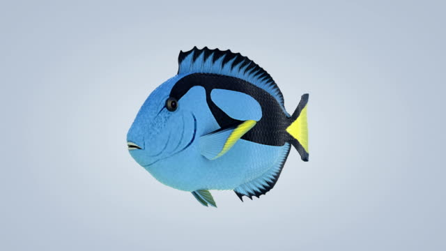 fish (loopable)