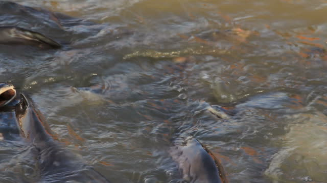 stockvideo's en b-roll-footage met fish - dierlijke mond