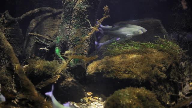 De Peixe