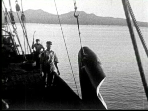b/w pan fisher men pulling dead whales by crane in boat  audio / - fischer stock-videos und b-roll-filmmaterial