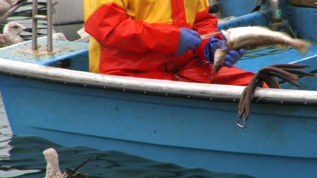 vidéos et rushes de pêcheur, bateau et gulls audio - mer du nord
