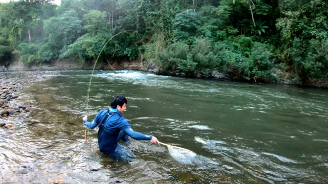 fisherman catching fish by fly fishing in thailand. - fly fishing stock videos and b-roll footage