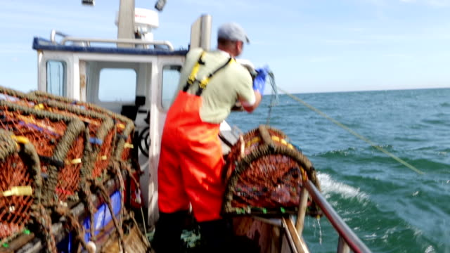 fisherman catching lobsters - lobster stock videos & royalty-free footage