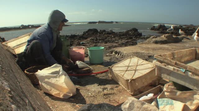 WS Fisherman cleaning fish in harbor, Essaouira, Morocco