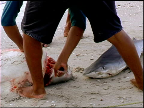 Fisherman Cutting Off a Sharks Head
