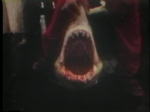"""fisherman describes how to remove the teeth from a dead shark and suggests watching the film """"jaws."""" - music or celebrities or fashion or film industry or film premiere or youth culture or novelty item or vacations点の映像素材/bロール"""