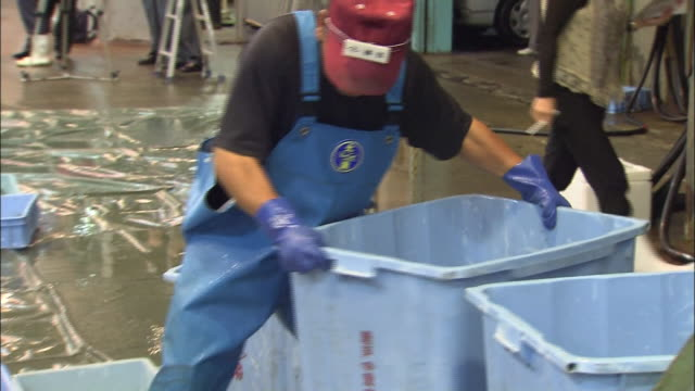 a fisherman dumps a container of writhing blowfish into a large pile at haedomari market in shimonoseki, japan. - fisherman stock videos and b-roll footage