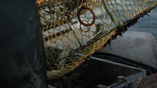 vídeos de stock, filmes e b-roll de cu fisherman emptying crabs from pot into crate on boat / mobile bay, alabama, usa  - grupo mediano de animales