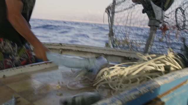 MS,RL Fisherman emptying fish and eel from cage on fishing boat